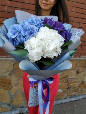 Букет из гортензий трех цветов