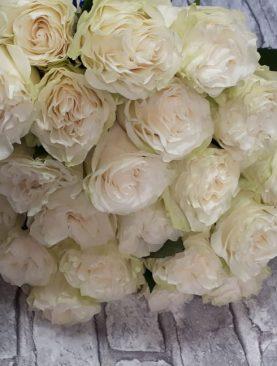 Белая Роза Мондиал