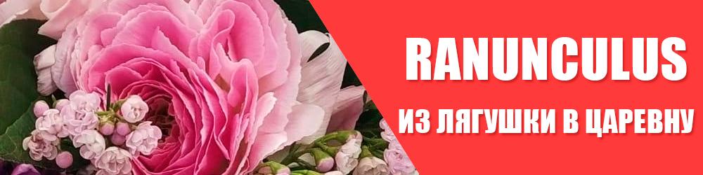 Ранункулюс – цветок романтической особы